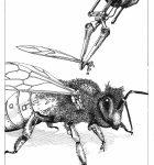 The Apple Bee